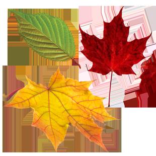 leaves1-1-ej-harrison-industries-trash-hauler